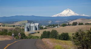 Farmland with Mt Hood